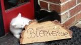 lille, terdeghem, restaurant à lille, restaurant terdeghem, restaurant flandres, flandres