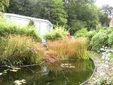 jardin-bassins-5346