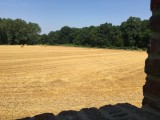 view-field-summer-13-9929
