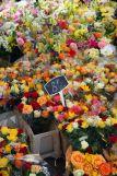 fleurs-maxime-dufour-photographies-5672