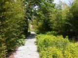 lille, jardin des geants lille, lmcu, cudl, communaute urbaine de lille, bambous