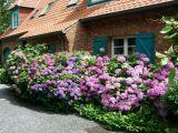 maison-fleurs-3562