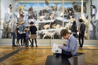 lille, visiter lille, musées lille, musée histoire naturelle lille, lille enfants