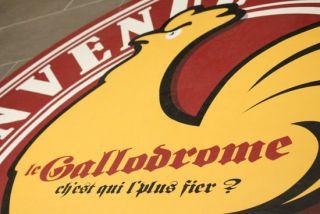 gallodrome-3877