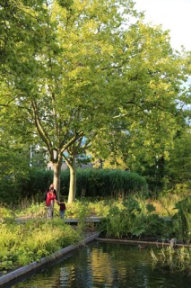 lille, jardin lille, jardin des géants lille