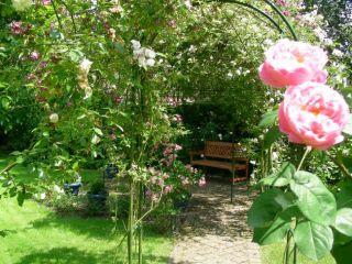 jardin-juin08-031-3553