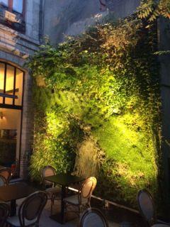 mur-vegetal