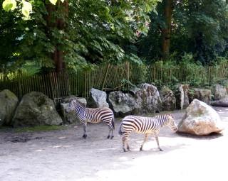 parc-zoologique-zebres-office-du-tourisme-lille-carineparquet-9420
