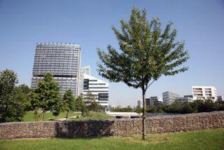 arbre parc Matisse