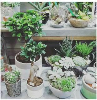 plante-verte-8287