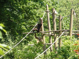 parc-zoologique-singes1-office-du-tourisme-lille-carineparquet-9419
