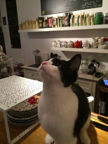 lille, sortir lille, salon de thé lille, chat voir vivre, chat voir vivre lille, salon de thé chat, salon de thé chat lille