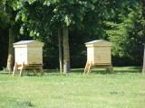 lille, maison du tourisme, mes envies en métropole de lille, miel, mielissa
