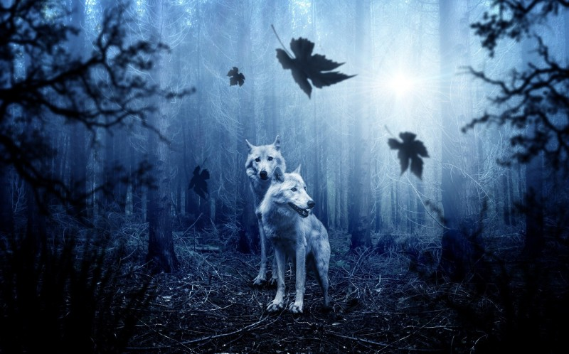 wolf-2864647-1920-63475
